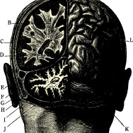 ELEMENTY DIAGNOZY NEUROPSYCHOLOGICZNEJ